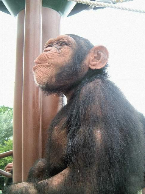фото рожи обезьян смешные Москве, метро Чеховская