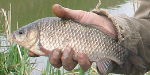 Билет рыбака будет стоить 365 рублей